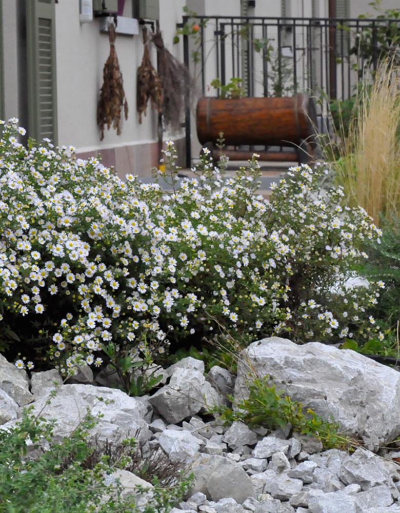 Aiuole progettazione e manutenzione giardini for Progettazione aiuole